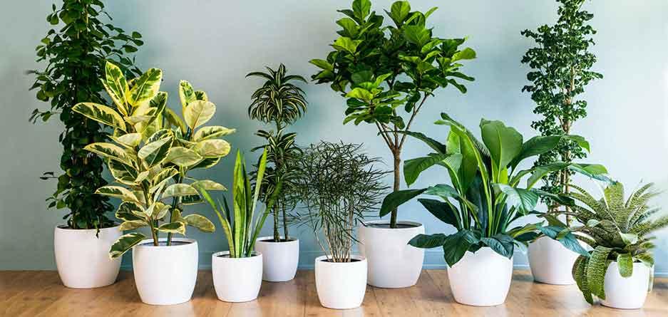 معرفی 5 گیاه آپارتمانی که نگهداری از آنها آسان است